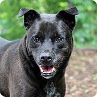 Adopt A Pet :: Bobby - Port Washington, NY