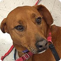 Adopt A Pet :: Annie - Lewisville, IN
