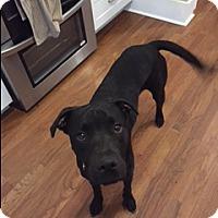 Adopt A Pet :: Rebel - Byhalia, MS