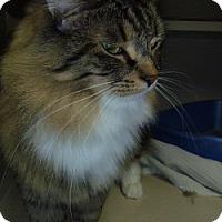 Adopt A Pet :: Cinder Princess - Hamburg, NY