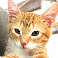 Adopt A Pet :: Winken - Davis, CA