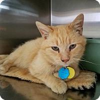 Adopt A Pet :: Ortiz - Elyria, OH