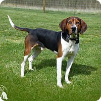 Adopt A Pet :: Rocky--RESCUED! - Marlinton, WV