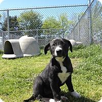Adopt A Pet :: Haylie - Terrell, TX
