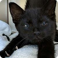 Adopt A Pet :: Rosie - Covington, KY