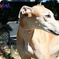 Adopt A Pet :: Nala - Orange County, CA