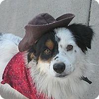 Adopt A Pet :: Bandito - Gilbert, AZ