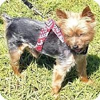 Adopt A Pet :: Alphie and Sammie - Hardy, VA