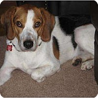 Adopt A Pet :: Ramona - Indianapolis, IN