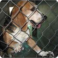 Adopt A Pet :: Sam I Am - Phoenix, AZ