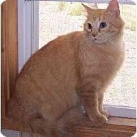 Adopt A Pet :: Scotty - Summerville, SC