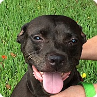 Adopt A Pet :: Minnie - Hollywood, FL