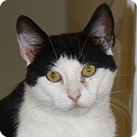Adopt A Pet :: Stevie - North Branford, CT