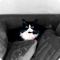Adopt A Pet :: Luna - Alexandria, VA