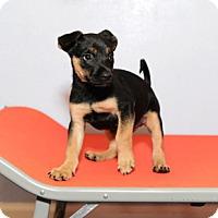 Adopt A Pet :: Luke - Jupiter, FL
