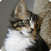 Adopt A Pet :: Alexa - Davis, CA