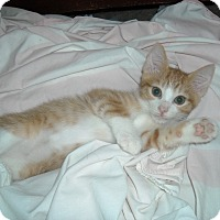 Adopt A Pet :: Angus-Lap /dog lover (& Polo) - Arlington, VA