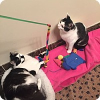 Adopt A Pet :: Robin and Scorpio - Chicago, IL