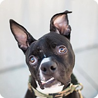 Adopt A Pet :: Marley - santa monica, CA