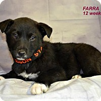 Adopt A Pet :: Farra - Yreka, CA