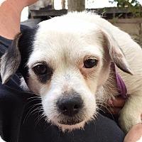 Adopt A Pet :: Myrtle - Orlando, FL