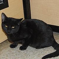 Adopt A Pet :: Tito - Whittier, CA