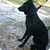 Adopt A Pet :: Oden - Riverview, FL