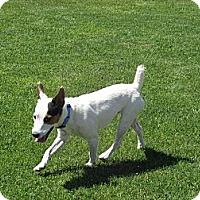 Adopt A Pet :: EDDIE V - Scottsdale, AZ