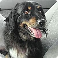 Adopt A Pet :: Hawk - Encinitas, CA