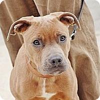 Adopt A Pet :: Edge - Reisterstown, MD
