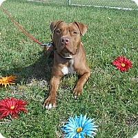 Adopt A Pet :: Buddy - Lockhart, TX
