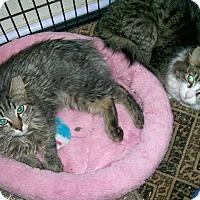 Adopt A Pet :: MJ - Scottsdale, AZ