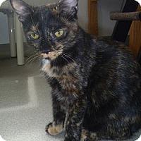 Adopt A Pet :: Lacey - Hamburg, NY