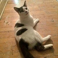 Adopt A Pet :: Peanut - Montreal, QC