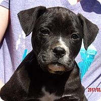 Adopt A Pet :: Hawk (8 lb) Video! - Sussex, NJ