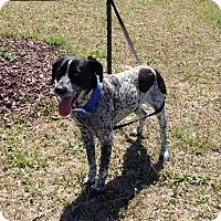 Adopt A Pet :: Dioge - Larned, KS