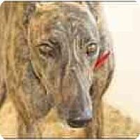 Adopt A Pet :: Rafe - St Petersburg, FL