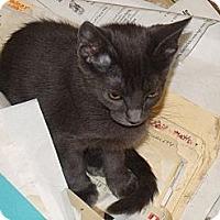 Adopt A Pet :: Shauna - Scottsdale, AZ