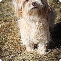 Adopt A Pet :: Malani - Broomfield, CO