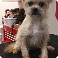 Adopt A Pet :: Harvey - Clarksville, TN