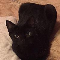 Adopt A Pet :: Sissy - Hazlet, NJ