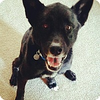 Adopt A Pet :: Loki - Irmo, SC