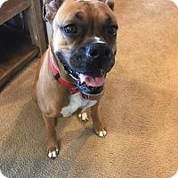 Adopt A Pet :: SASS - Boise, ID