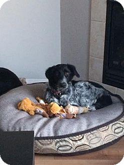 Newfoundland Mix Dog for adoption in Edmonton, Alberta - Patience