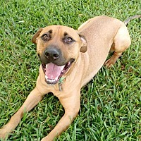 Adopt A Pet :: Raj - Davie, FL