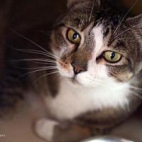 Adopt A Pet :: Gizmo - Tucson, AZ