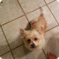 Adopt A Pet :: Teixie - Decatur, AL