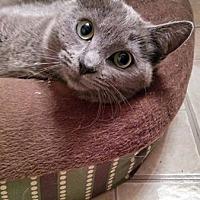 Adopt A Pet :: Effie - Jefferson, NC