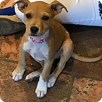 Adopt A Pet :: XYLIA - Katy, TX