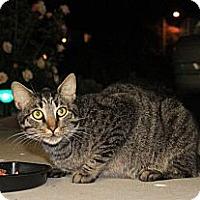 Adopt A Pet :: Furby - Laguna Woods, CA